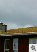 """""""Ekstensīvie zaļie jumti"""""""