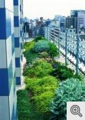 """""""intensīvs zaļais jumts"""""""